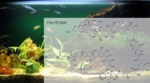 Døden lurer i akvariet
