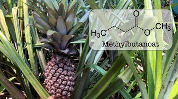 Den skønne duft af ananas