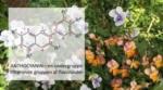 Blomsternes solcreme