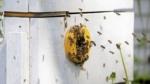 Bier byggede en kube af plast