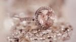 Diamanter – de er da ordinære