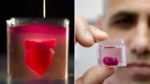 3D-printede et hjerte med biologisk blæk
