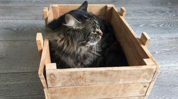 Katten i kassen
