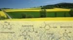 Sammenhæng mellem pesticider og børneleukæmi?