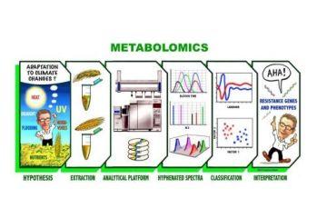 Metabolomics undersøger omsætningen af stoffer (metabolitter) – fx stoffer fra maden – i biologiske væv/væsker (fx fra et menneskes urin, afføring og blod). I blodet er der tale om en kollektiv karakterisering og kvantificering af alle metabolitter samt blodets indhold af lipoproteiner. Resultatet af en metabolomics-undersøgelse er et fysisk kemisk fingeraftryk af, hvad der er sket i kroppen. Dette fingeraftryk kan bruges til at afsløre afvigelser fra en given normaltilstand ved hjælp af multivariat databehandling (kemometri). NMR er bare en af flere analytiske metoder, der benyttes til metabolomics; to andre meget udbredte metoder er gaskromatografi koblet med massespektrometri (GC-MS) samt væskekromatografi koblet med massespektrometri (LC-MS). Illustration: Newlin og Engelsen.