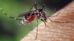 Det tænder en myg på