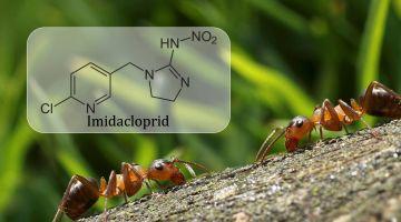 Vind kampen mod myrerne